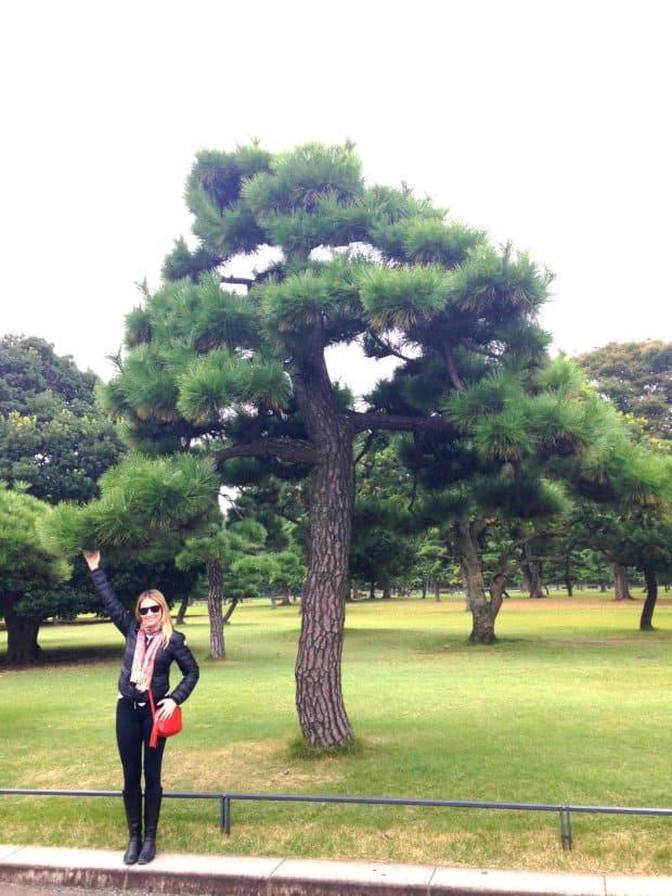 Palácio Imperial - Tokyo - DQZ  - Pinheiro Negro